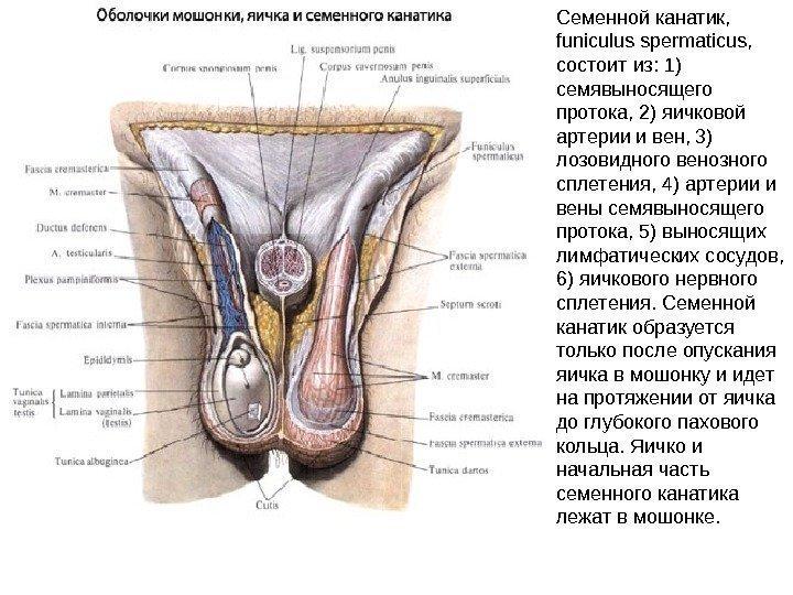 net-spermatozoidov-v-yaichkah