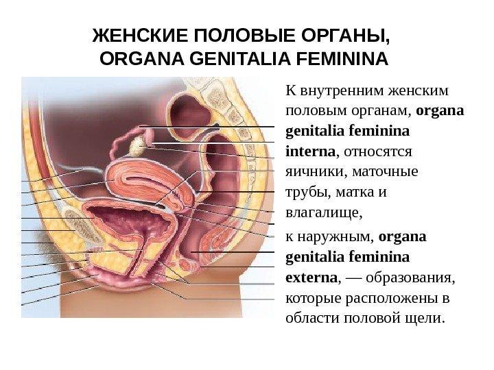 o-zhenskom-vlagalishe-video-anatomiya-porno-s-pyanimi-blyuet