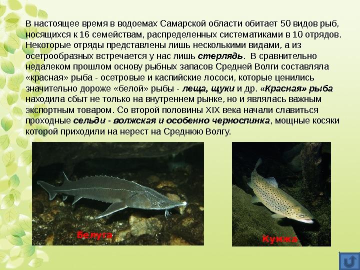 виды рыб самарской области в картинках страшные длинные