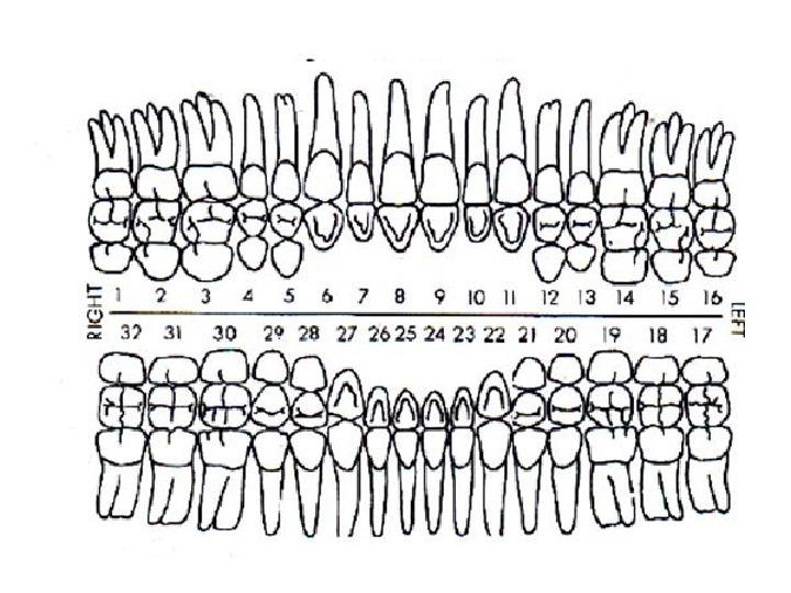зубная схема картинки ленту