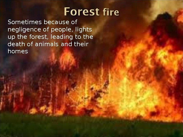 Sometimes because of negligence of people, lights up the forest, leading to the death