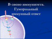 В-звено иммунитета. Гуморальный иммунный ответ В-лимфоцит B-клетки, от