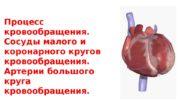 Процесс кровообращения.  Сосуды малого и коронарного кругов