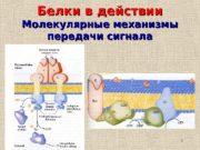 1 Белки в действии Молекулярные механизмы передачи сигнала