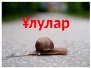 Ұлулар  Ұлулар (Gastropoda) — жұмсақ тәнді