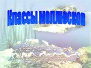 Классификация моллюсков Количество видов более 130 тысяч. Тип