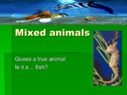 Mixed animals Guess a true animal Is it