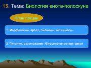 15 Тема Биология енота-полоскуна План лекции 1 Морфология