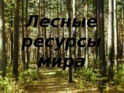 Лесные ресурсы мира  ЛЕСНЫЕ РЕСУРСЫ МИРА