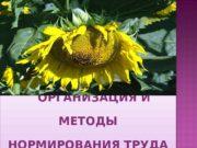 ОРГАНИЗАЦИЯ И МЕТОДЫ НОРМИРОВАНИЯ ТРУДА 01 0 B