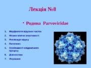 Лекція № 8  Родина  Parvoviridae 1.