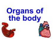 Organs of the body brain heart lungs stomach