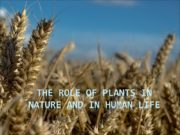 The role of plants in nature and in