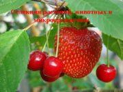 Селекция растений, животных и микроорганизмов  Селекция —
