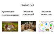 Экология Аутэкология экология видов Экология популяций Экология экосистем