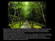 Японские сады уникальные образцы не только ландшафтного