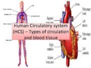 Human Circulatory system HCS Types of circulation