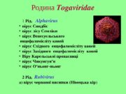 Родина Togaviridae 1  Рід. Alphavirus  вірус