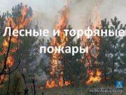 Лесные и торфяные пожары Лесной