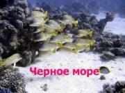 Черное море Чёрное море внутреннее море бассейна