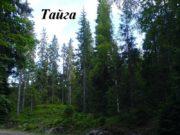 Тайга Тайга — биом, характеризующийся преобладанием хвойных лесов
