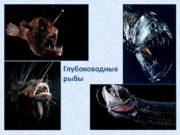 Глубоководные рыбы Хиазмод (Черный живоглот) Обитающий в Атлантическом