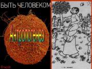 Антропогенез Доказательства животного происхождения человека Современное положение человека