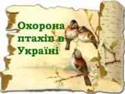 Охорона птахів в Україні В Україні понад 400