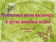 Изменения в жизни насекомых и других животных весной