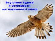 Внутрішня будова й особливості життєдіяльності птахів Як улаштована