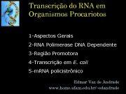 Transcrição do RNA em Organismos Procariotos 1 -Aspectos