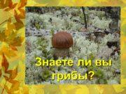 Знаете ли вы грибы? Всякий гриб в руки