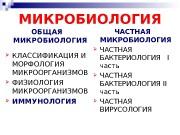 МИКРОБИОЛОГИЯ ОБЩАЯ МИКРОБИОЛОГИЯ  КЛАССИФИКАЦИЯ И МОРФОЛОГИЯ МИКРООРГАНИЗМОВ