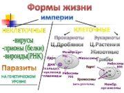 хх хх (нити ДНК+белок )Ядро Мембр. орг- лы