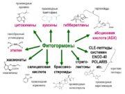 Фитогормоны цитокинины этилен ауксины гиббереллины абсцизовая кислота (АБК)