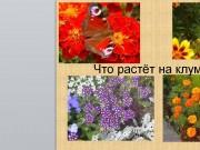 Презентация цветов