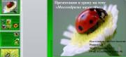 Презентация многообразия насекомых