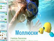 Презентация Моллюски