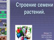 Презентация Строение семени