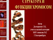 Презентация Строение хромосом