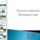 Презентация Приморский край