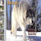 Презентация Волк