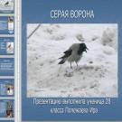 Презентация Серая ворона