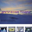 Презентация Арктические тундры