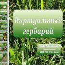 Презентация Виртуальный гербарий