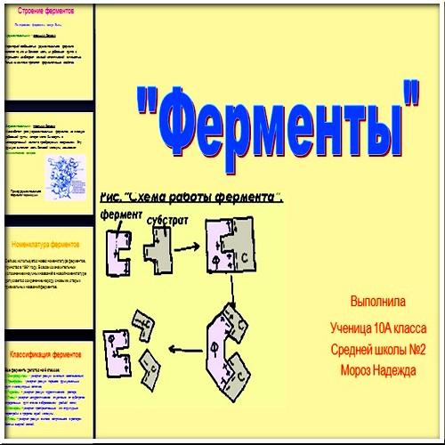 Презентация Ферменты