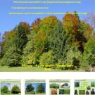 Презентация Смешанные и лиственные леса