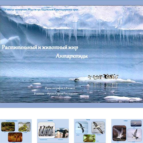 Презентация Мир Антарктиды