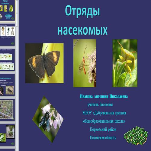 Презентация Отряды насекомых