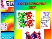 Презентация Составляющие ДНК